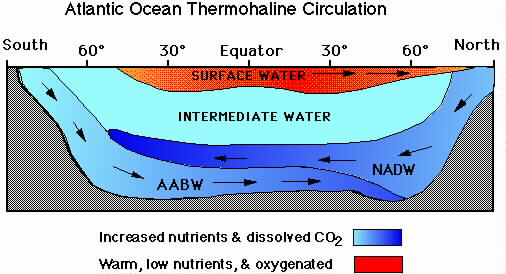 [Immagine: Thermohaline%20Circulation.files%5CNADW.jpg]